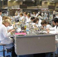 Eifriges Aufwachsen im Labor